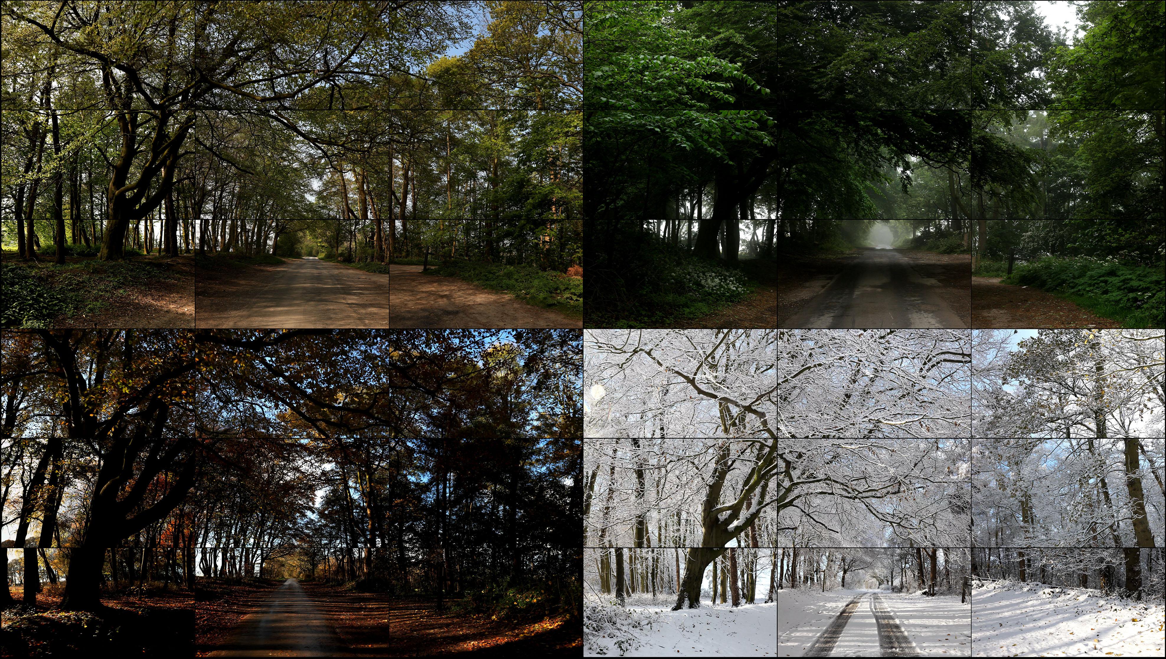 17David Hockney The Four Seasons Woldgate Woods 2010-2011 36 vidéos numériques © David Hockney - Copie.jpg