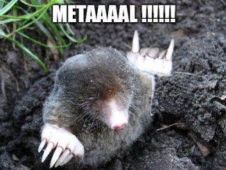 taupe qui aime le metal